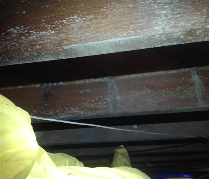 Crawlspace covered with mold Before
